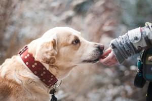 Niepełnosprawna przyszła do pracy z psem. Nie przedłużyli jej umowy