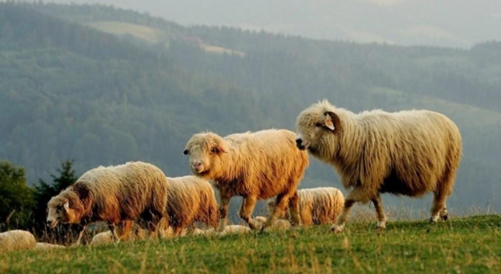 """Konkursy """"Owca Plus"""" rozstrzygnięte"""