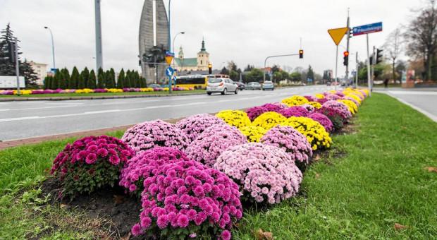 Rzeszów, Starachowice, Wałbrzych. Te miasta przyciągają pracą okoliczną ludność