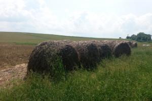 Rząd pomoże farmerom dotkniętym wojną celną