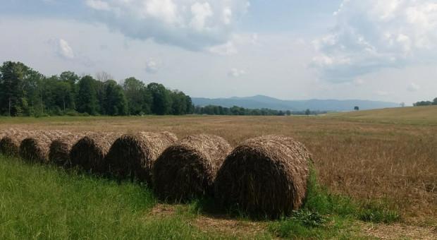 W poniedziałek informacja o skali pomocy rolnikom dotkniętym suszą