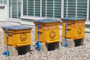 Pszczoły na dachu galerii handlowej. Miód kupią klienci