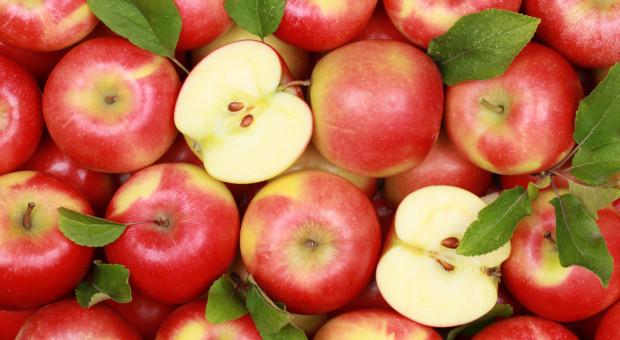 Sadownicy znów wyszli protestować. Nie opłaca się im zrywać jabłek z drzew
