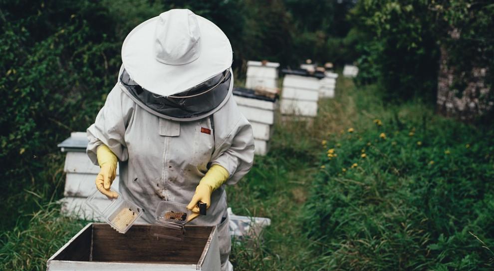 Wśród pszczelarzy w Polsce przeważają osoby w wieku 50+