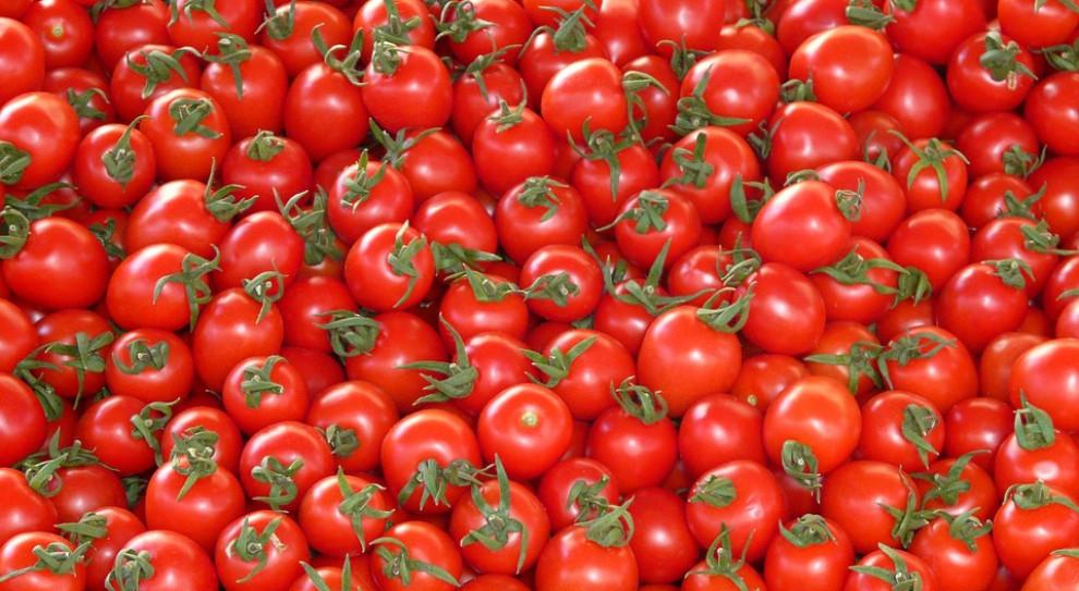 We Włoszech demonstracje migrantów zatrudnionych przy zbiorach pomidorów