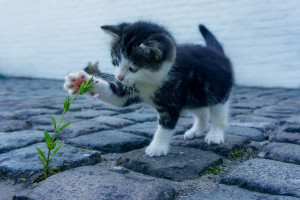 Opieka nad kotami na idyllicznej greckiej wyspie. Kolejna praca marzeń?