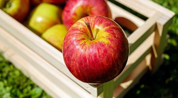 Włoski pracodawca więził Polkę w skrzynce na owoce