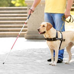 Pracodawcy coraz częściej zatrudniają osoby niewidome