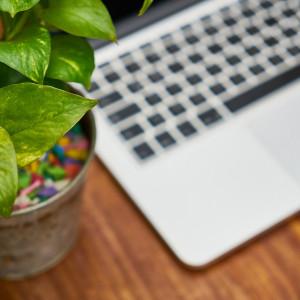 Rośliny w biurze? To ma sens
