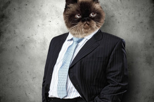 Tłuste koty świętują. W dziewięć dni prezesi zarobili tyle, ile średniacy zarobią przez cały rok
