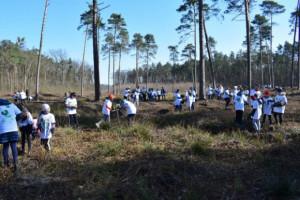 CSR w wykonaniu Tikkurila Polska. Przez 5 lat zasadzili 30 000 drzew