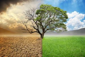 CSR drugą twarzą zrównoważonego rozwoju firmy