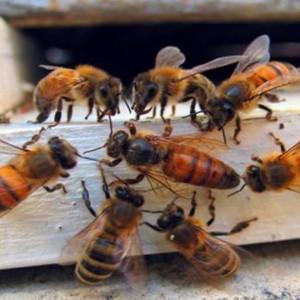 """Kielecka firma wspiera akcję """"Pszczoły w mieście"""""""