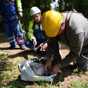 Energetycy opiekują się bocianami i ich gniazdami
