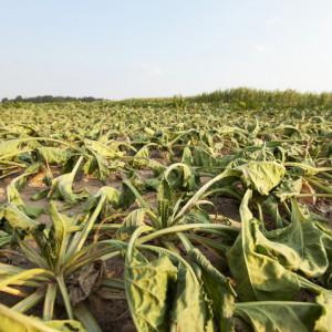 Od września dodatkowe pieniądze dla rolników. Minister zapowiada nowy program
