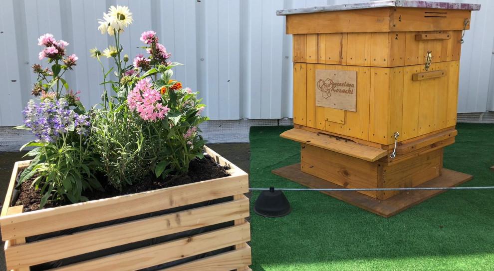 CSR w wykonaniu Carrefour. Rośnie sieć hoteli dla pszczół