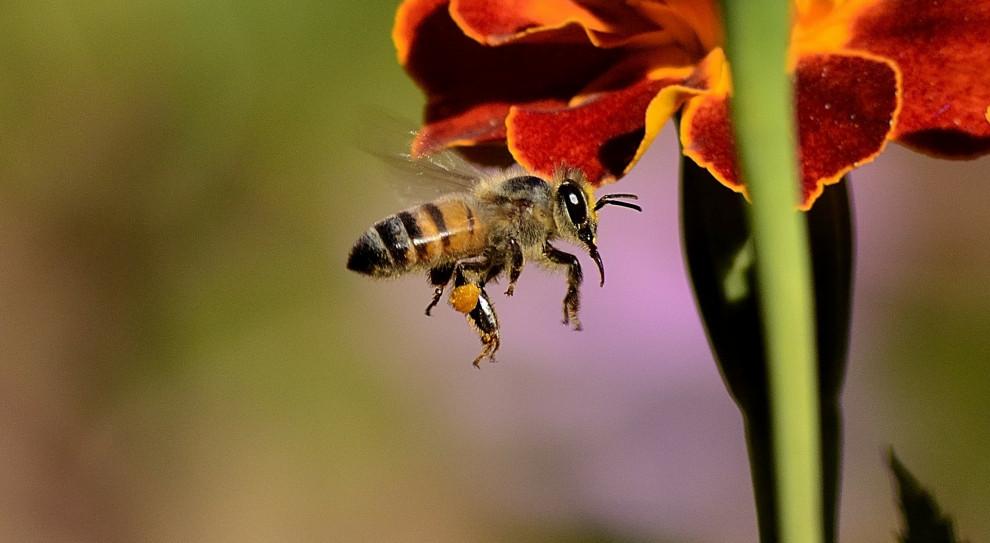 W Rzeszowie Nestlé i pracownicy wspierają populację pszczół