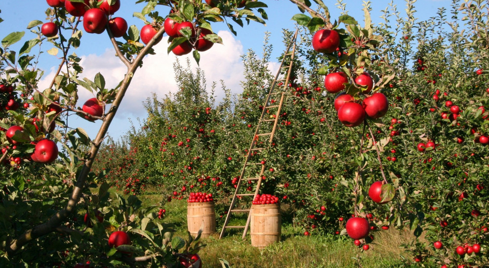 ONZ krytykuje Rzym za brak walki z przymusową pracą w rolnictwie