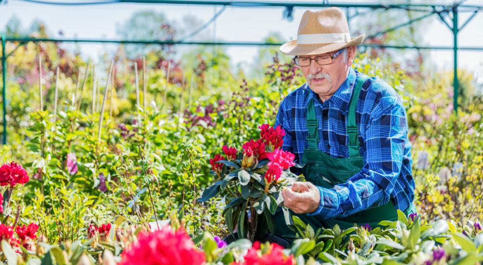 Seniorzy na rynku pracy. Trzy czwarte z nich żyje tylko z emerytury