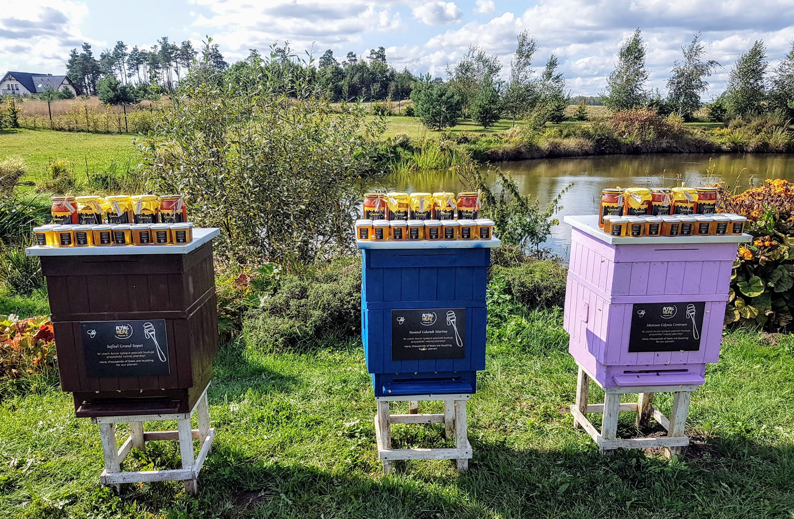 Accor Bee Hives TriCity-Poland_2 .jpg