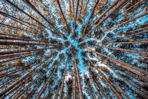 Pracownicy GIS posadzą drzewa i krzewy na 100-lecie istnienia służb sanitarnych