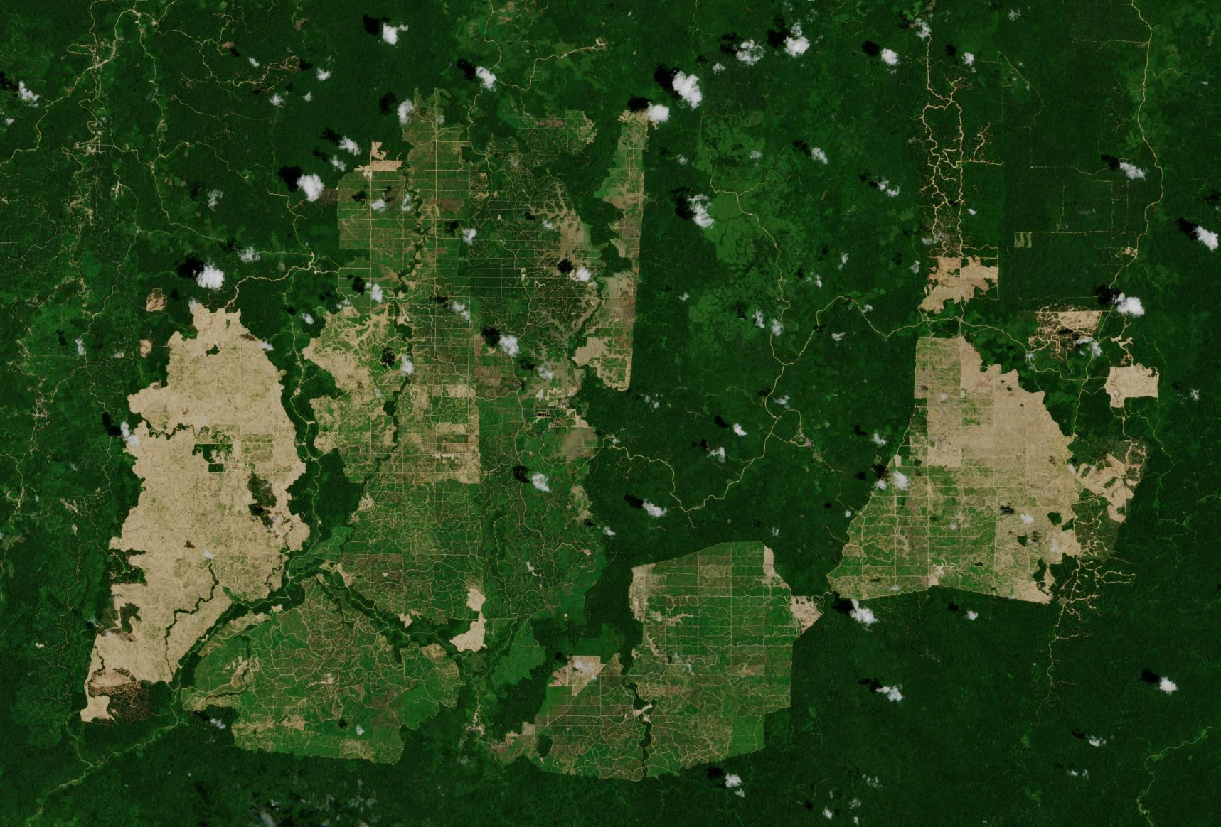 Kalmantan, Indonezja, plantacje palm olejowej fot. mat. pras.