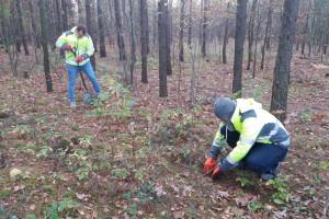 W zamian za opinię o zintegrowanym raporcie firma posadziła 200 drzew