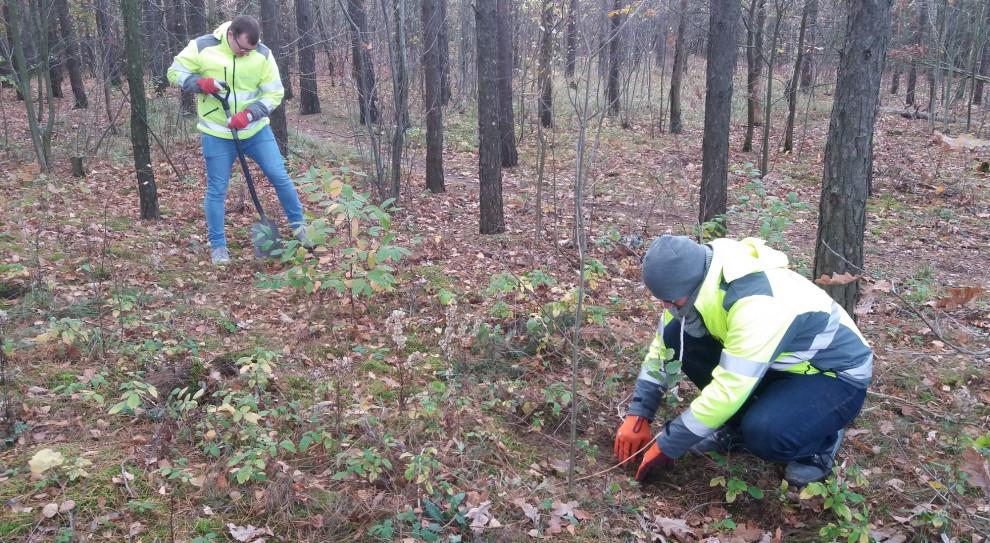 W zamian za opinię o zintegrowanym raporcie Budimex posadził 200 drzew
