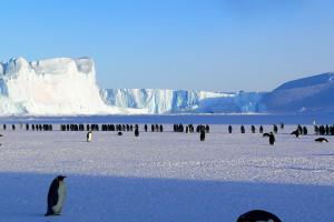 Chcesz pracować na Arktyce? Polska stacja polarna rekrutuje