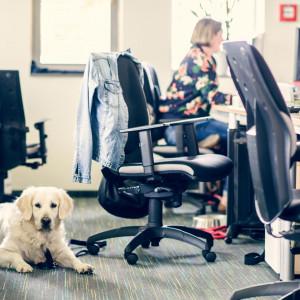 Już sama ich obecność obniża stres w pracy. Ale też mają swoje wymagania
