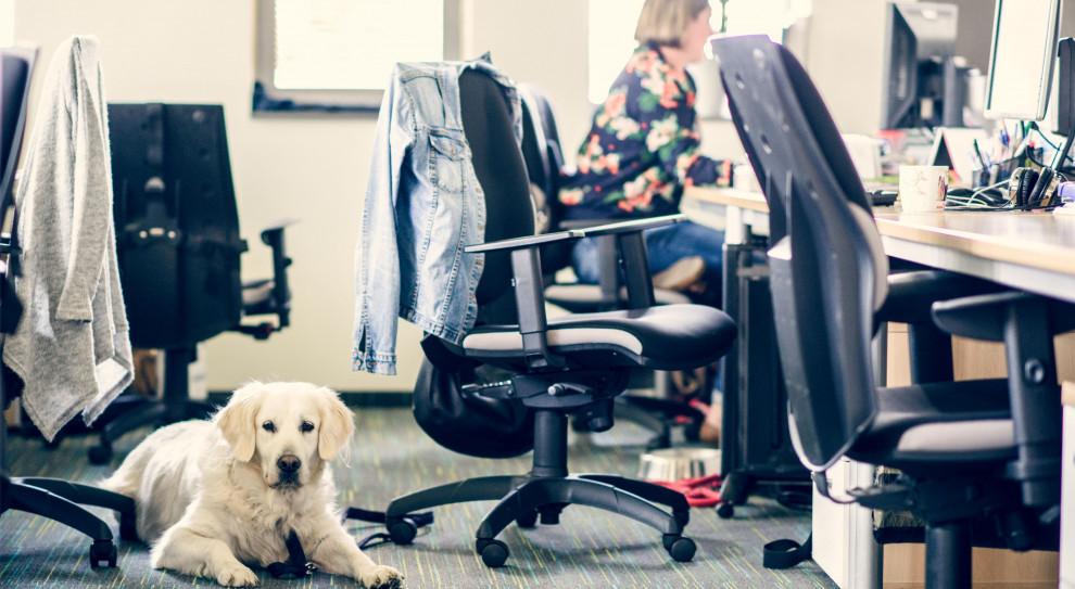 Pies w pracy. Jak przygotować biuro i na co zwrócić uwagę?