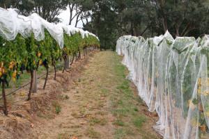 Produkcja wina coraz bardziej dochodowa