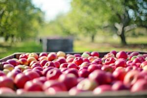 Przedsiębiorcy i rolnicy rezygnują z ekologicznej produkcji. To się nie opłaca