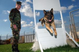 Polska armia rekrutuje psy do akcji poszukiwawczych