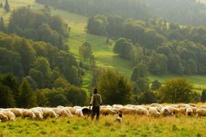 Rolnicy z dochodem lepszym tylko od rencistów