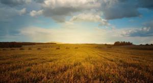 Surinam chce przyjąć rolników z Holandii