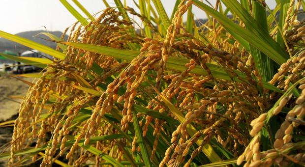 Będą nowe zasady zasiłku chorobowego dla rolników