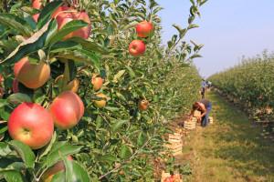 Brak pracowników uderzy w ogrodnictwo. Zwłaszcza w tych krajach
