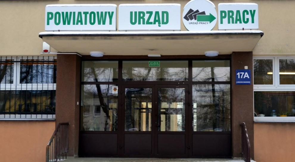 Urzędnicy apelują, by - zamiast przychodzić do urzędu - kontaktować się z nimi telefonicznie lub online. (fot. praca.gov.pl)