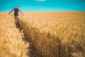 Młodzi rolnicy dostaną dodatkowe pieniądze