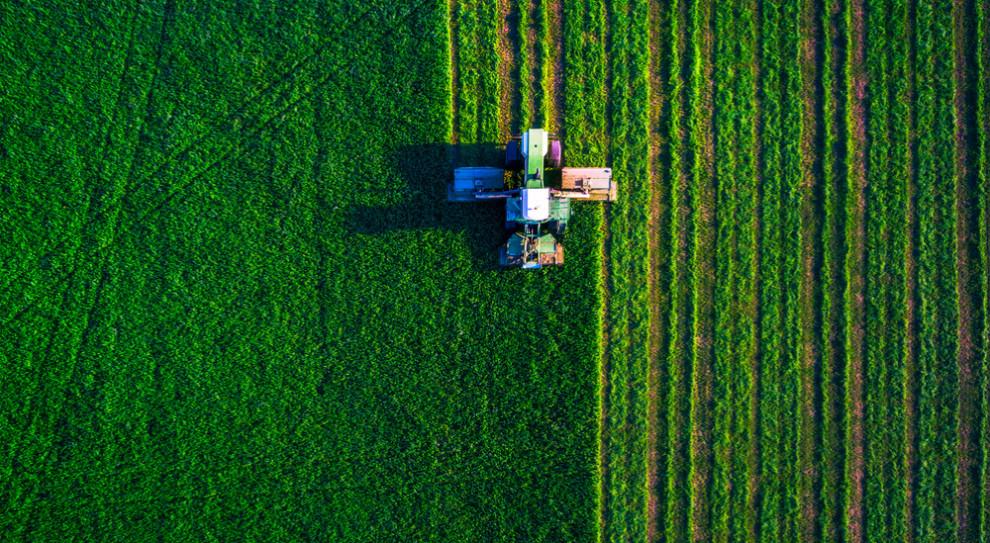 Potrzeba 500 tys. osób do zbiorów owoców. Rolnicy szukają rąk do pracy