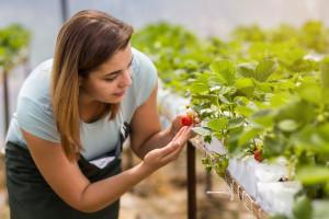 Pracownicy sezonowi mogą pracować bez kwarantanny