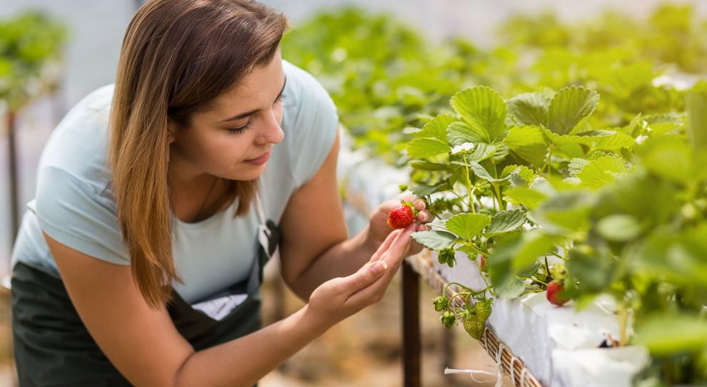 Pracownicy sezonowi zza granicy mogą pracować w rolnictwie bez kwarantanny
