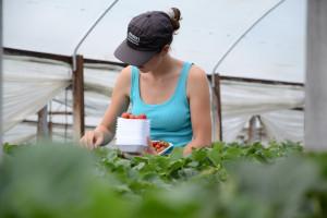 Przedłużono prawo do pracy w rolnictwie dla cudzoziemców