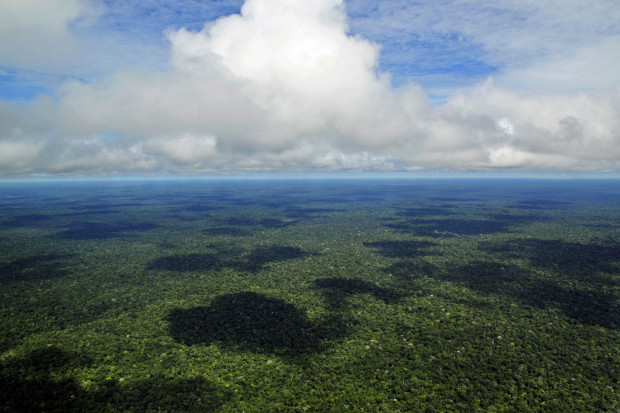 Urzędniczka straciła pracę po opublikowaniu danych o Amazonii