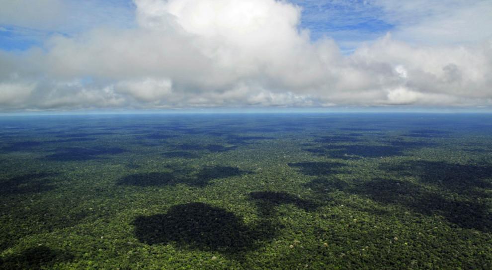 Urzędniczka straciła pracę po opublikowaniu danych o wylesianiu Amazonii