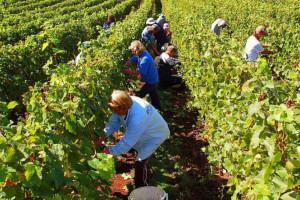 Testy na koronawirusa u zagranicznych pracowników sezonowych w rolnictwie