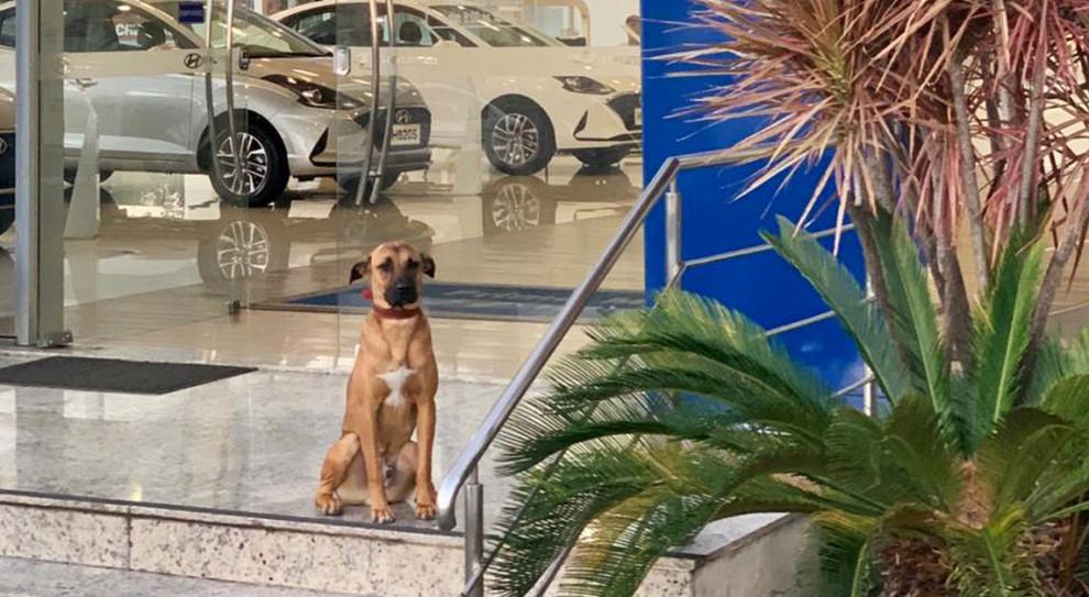 """Bezpański pies odwiedzał salon samochodowy Hyundai. Firma postanowiła go """"zatrudnić"""""""