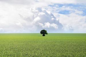 """""""Zielone"""" zarządzanie zasobami ludzkimi nabiera na znaczeniu"""