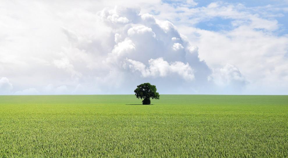 """Green HRM, czyli """"zielone"""" zarządzanie zasobami ludzkimi nabiera na znaczeniu"""